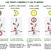 Lunar Phases and the Planting Cycle