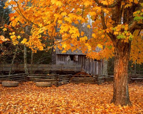 Beautiful Fall Pictures Wallpaper Картинка на рабочий стол Осень Мельница в осенних листьях