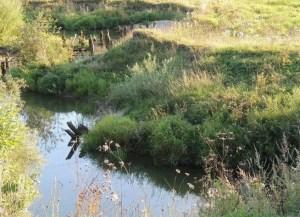 река Чёлсма