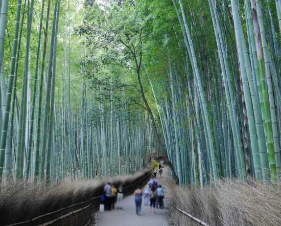 竹林の道 絶景