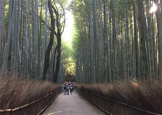 竹林の道 絶景ポイント