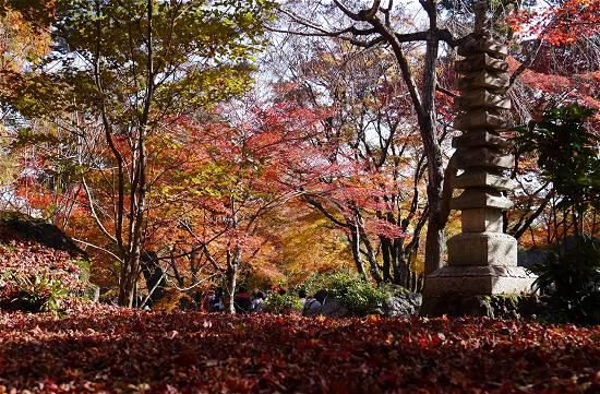 宝厳院 落ち葉 紅葉の絨毯