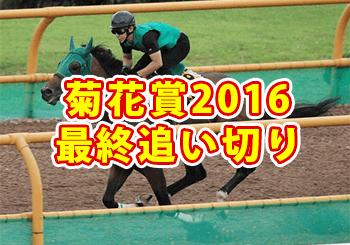 菊花賞2016,最終追い切り