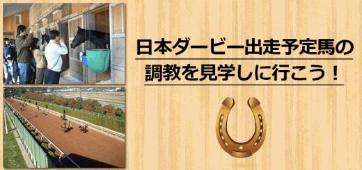 日本ダービー出走予定馬の調教を見学しにいこう