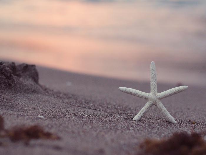beachstar