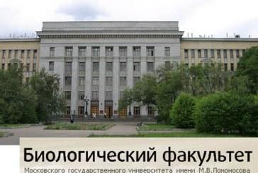 МЕТОДОЛОГИЧЕСКИЕ ПРИНЦИПЫ А.Л.ЧИЖЕВСКОГО.