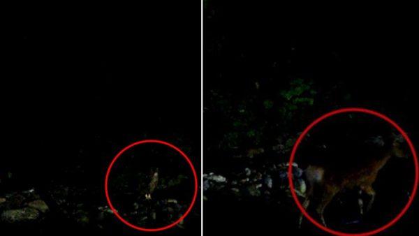 左がシマフクロウ、右が鹿