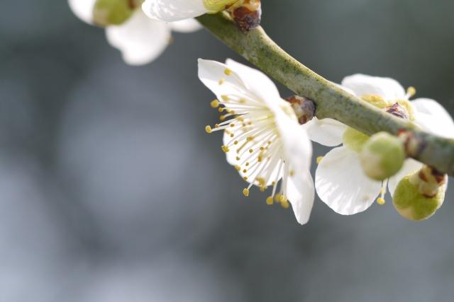 早春の候 意味