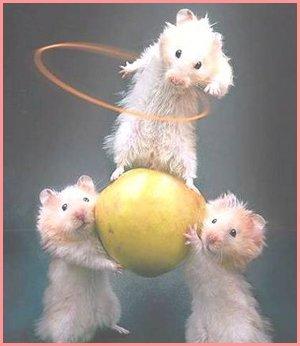 ratones jugando