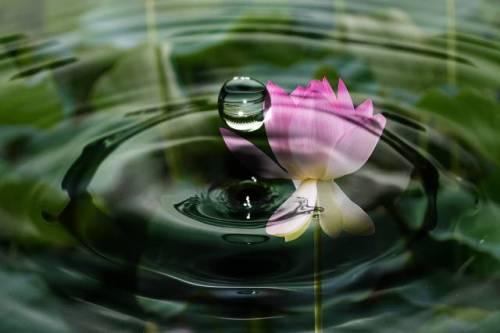 drop-of-water-2092495_1920