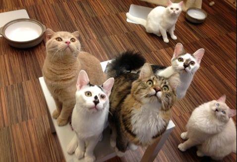 堺猫カフェ ゆる猫