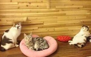 ゆる猫 営業時間