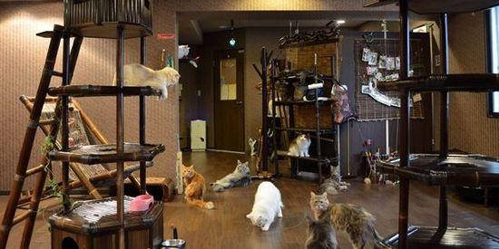 猫カフェ ぐるぐる堂