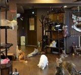 【大阪】 心斎橋の猫カフェなら『ぐるぐる堂』♪料金や特徴は?