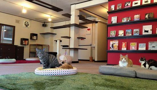 猫カフェ ミューキーズ