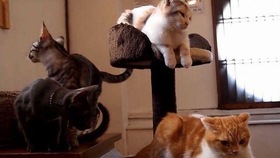 猫カフェ Cafe犬猫人