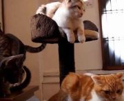 【京都】 河原町の猫カフェ 『cafe 犬猫人』料金や特徴は?