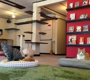 【札幌】 東区の猫カフェなら 『ミューキーズ』料金や特徴は?
