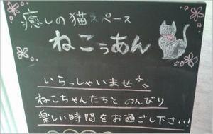 ねこぅあん 猫カフェ