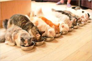 子猫カフェなら東京の猫カフェMoCHA(モカ)渋谷店がオススメ