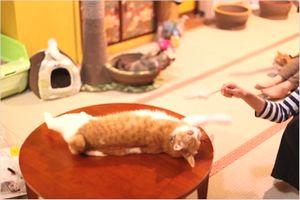 【保護猫カフェ】 ネコリパブリックが心斎橋に!猫ちゃんとの出会いを応援