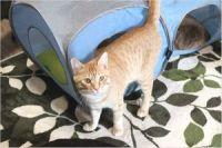 【保護猫カフェ】 かぎしっぽの営業時間やアクセス方法は?