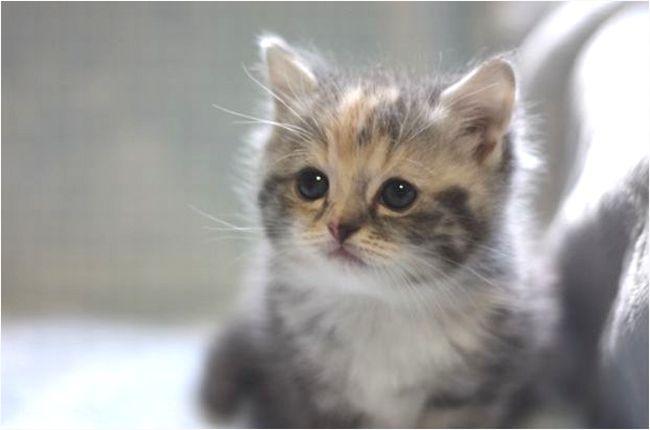 【猫の病気】血尿がでる症状は危険!尿石や腎臓が原因かも