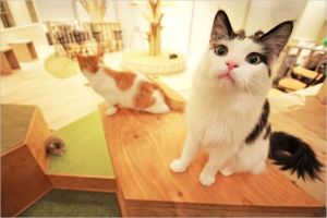 【東京】猫カフェで子供と入れるお店はどこ?