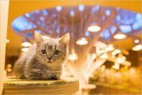 大阪で人気の猫カフェ4選はココ♩営業時間や料金も必見!