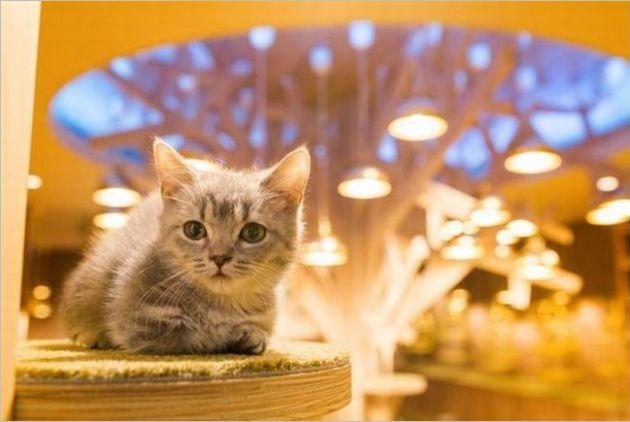 大阪の猫カフェ