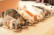 【奈良猫カフェ】オススメまとめ!料金やアクセス方法を紹介