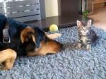 子猫と一緒に遊びたい犬。小さな猫を静かに誘う姿に胸キュン