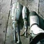 [初心者必見] コツさえつかめば簡単に釣れるアオリイカの釣り方 エギング編