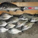 [小浜湾 筏釣り] 野村渡船 福井県小浜市甲ヶ崎の釣り筏 かかり釣り