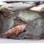 [白浜・紀州] 和歌山県おすすめの釣り筏・渡船屋さんまとめ一覧