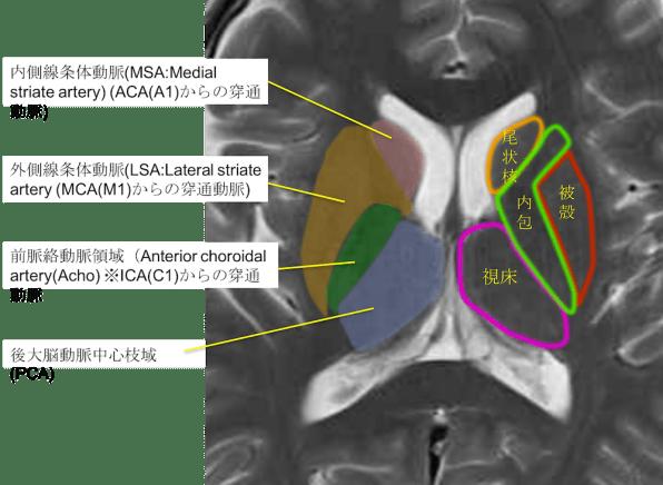 blood suply of basal ganglia