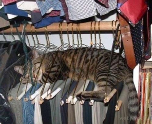 狭いとこ好き猫19