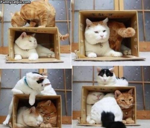 狭いとこ好き猫5