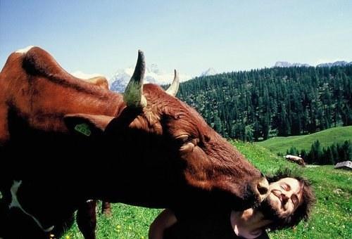 幸せそうな動物たち34