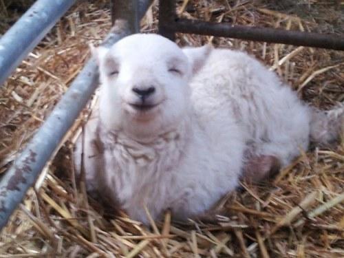 幸せそうな動物たち39