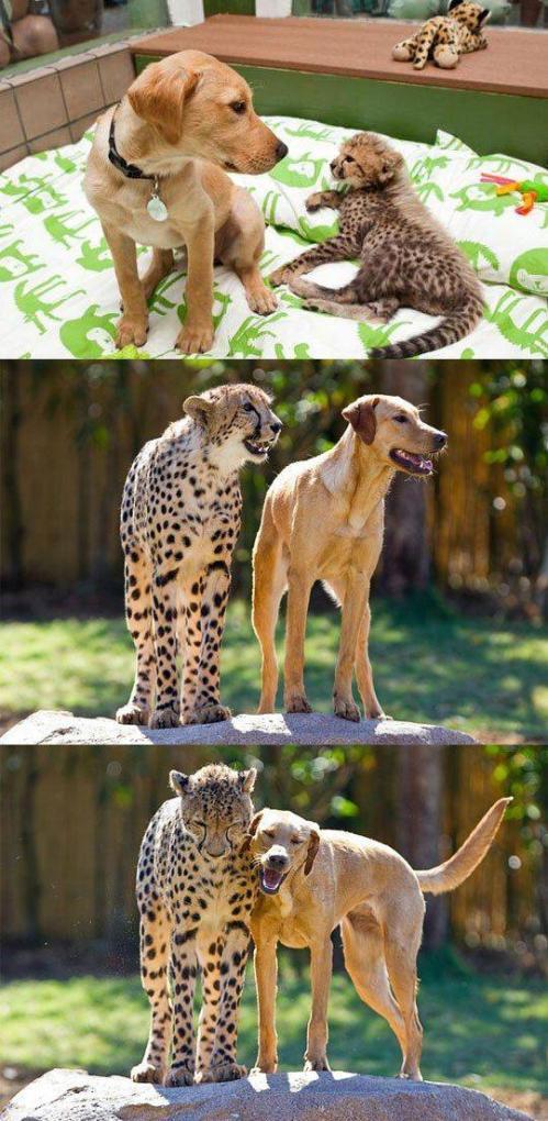 仲良し動物8