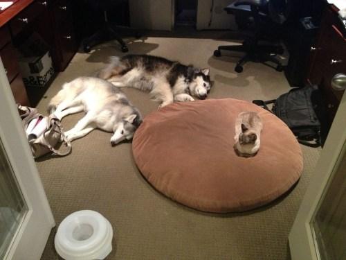 失った犬と奪った猫10