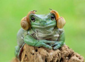 tantoyensen-frog-1-600x440