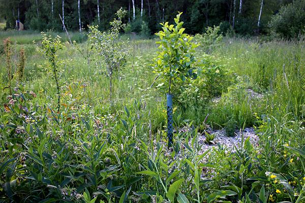 Puttmyra skogsträdgård i juli 2016. Förutom att mycket av plasten är borttagen nu ser sorkens drömhabitat ut ungefär så här.