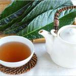 『びわの葉茶』の驚くべき効能や作り方は?