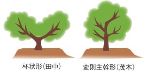 剪定後の樹形