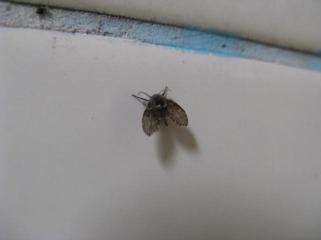 お風呂場,黒い虫