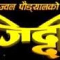 Nepali Movie - Ziddi