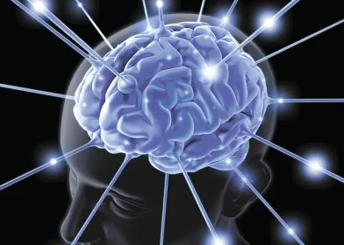 Cerebro-700x500