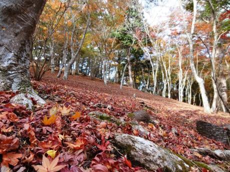 もみじ林の晩秋